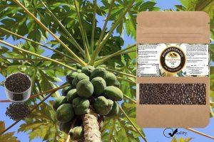 Papaya Kerne Samen 50g